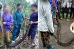 Xác minh thông tin dân Nghệ An vây bắt 2 con trăn gấm rồi nấu cao
