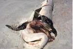 Phẫn nộ cá mập bị moi ruột, lấy hàm, nằm phơi xác giữa bãi biển