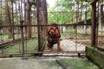 Lạnh sống lưng trong trại hổ vồ bé trai 13 tuổi ở Thanh Hóa