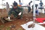 Phát hiện 14 hài cốt liệt sĩ ở Hàng rào điện tử McNamara, Quảng Trị