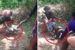 Clip: Vật lộn cứu người đàn ông bị trăn khủng siết chặt