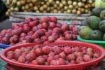 Mận Trung Quốc ồ ạt về chợ Việt Nam
