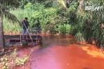 Bình Dương: Nước chuyển màu đỏ máu, cây và cá chết hàng loạt