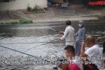 Video: Cần thủ 'giăng bẫy' trên 'hồ thiên nga' duy nhất của Hà Nội