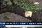 Video: Hoàn lưu bão số 6 gây dông lốc, quật gãy cây xanh ở Lào Cai