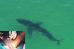Ngư dân bị cá mập cắn bầm dập ở biển Bạch Long Vĩ