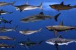 Video: Điểm mặt 15 loài cá mập lớn nhất từng tồn tại trên thế giới