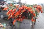Hoa tươi rớt giá thảm hại, người bán vứt đống trong thùng rác