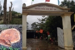 Đốn hạ gần 100 cây xanh, chở về nhà giáo viên và phó chủ tịch HĐND xã