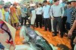 Cận cảnh cá voi nặng nửa tấn dạt vào bờ biển Thanh Hóa
