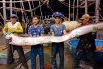 Xôn xao clip ngư dân bắt được cá hố khổng lồ, 4 người nâng mới xuể
