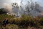 Cháy rừng ở Khu Bảo tồn thiên nhiên bán đảo Sơn Trà