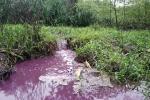 Nhà máy vàng mã xả nước thải màu tím hôi nồng nặc