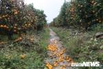 Bắt giam kẻ dùng thuốc trừ cỏ sát hại hơn 300 cây quất cảnh