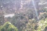 Hãi hùng cảnh cả triệu con châu chấu đen kịt trời tàn phá Sơn La