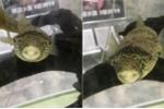 Clip: Quái cá răng hô luôn nở nụ cười tự tin khiến dân mạng phì cười