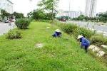 Hà Nội giảm tiền cắt cỏ từ 886 tỉ xuống 178 tỉ đồng