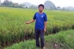 Truy tìm kẻ cắm thanh sắt đầy ruộng phá máy gặt lúa của người dân