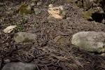 Video: Rùng rợn động rắn lớn nhất thế giới, nhung nhúc hàng chục nghìn con