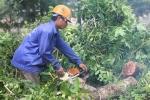 Ảnh: Hàng cây cổ thụ 'nhường chỗ' cho đường sắt Nhổn - Ga Hà Nội