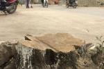 Dẹp 'cướp' vỉa hè, chặt hạ hàng loạt cây xanh: Sẽ kiểm điểm cán bộ xã