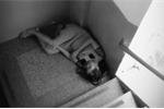 Ảnh mẹ bầu nằm ngủ co ro ở góc cầu thang bệnh viện khiến dân mạng xót xa