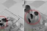 Phẫn nộ clip cô giáo mầm non ở Vũng Tàu đạp trẻ, mặc kệ trẻ khóc