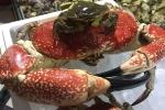 Chiêm ngưỡng con cua 8kg giá 60 triệu đồng tại Việt Nam