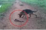 Clip: Chó dại dột cắn lươn điện và cái kết kinh hoàng