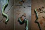 Bị đập bẹp đầu, rắn mẹ vẫn quằn quại đẻ hàng chục con trước khi chết