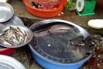 Cá lóc 'cháy' hàng trong ngày vía Thần Tài ở Huế