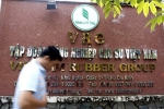 IPO 'ế ẩm', Tập đoàn Cao su Việt Nam dự kiến mở cửa cho nhà đầu tư ngoại