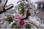 Trời rét -2°C, Thác Bạc phủ trắng băng tuyết