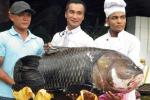 Cá 'khủng' liên tiếp 'đổ bộ' nhà hàng TP.HCM