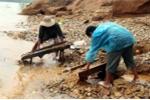 Dân Quảng Nam đổ xô ra sông đào vàng sau lũ