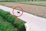 Clip trêu chó bằng flycam khiến dân mạng cười té ghế