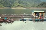 Tổ hợp bè cá của nông dân Thái Nguyên thu 5 tỷ đồng/năm nhìn từ flycam