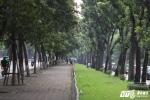 Ảnh: Ngắm 130 cây xanh trên đường Kim Mã trước ngày 'khai tử'