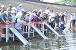 Thả 50 nghìn con cá giống tại lễ hội Cầu mưa ở Quảng Nam