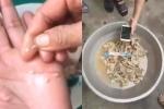 Không còn mẫu thịt lợn nghi nhiễm sán trường mầm non Bắc Ninh để điều tra