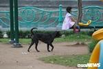 Ảnh: Hãi hùng cảnh trẻ em Hà Nội vô tư chơi đùa bên những con chó không rọ mõm