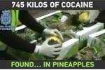 Clip: 745 kg ma túy được giấu trong những trái dứa