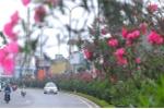 Cục ATTP cảnh báo phòng ngừa ngộ độc do độc tố tự nhiên từ cây cảnh trồng quanh trường học