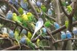 FLC Vĩnh Phúc chào đón du khách với vườn chim nhiệt đới đặc sắc