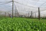 Hệ thống tự động hóa made in Vietnam cho nhà trồng thông minh