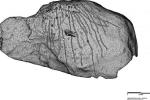 Chuyện không tin nổi về hình chạm khắc trên đá cổ chỉ hiện lên dưới ánh trăng