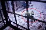 Clip: Bầy khỉ hung dữ tấn công, quật ngã người đàn ông