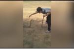 Clip: Nam thanh niên bắt rắn hổ mang chúa 'khủng' trong tích tắc