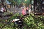 Clip: Cây xanh đổ rạp, đường phố Hà Nội hỗn loạn