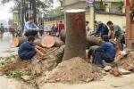 Ông Nguyễn Thế Thảo: Thay thế cây xanh là tồn tại, yếu kém của Hà Nội